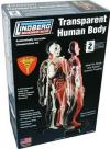 LINDBERG HUMAN BODY 1/6 TRANSPARENT
